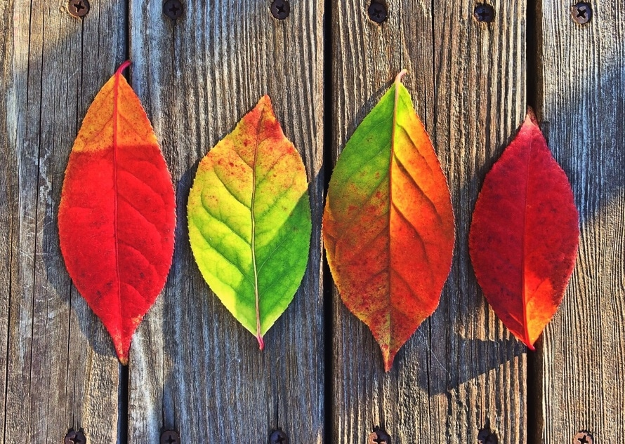 leaves-fall-colors-rainbow-large