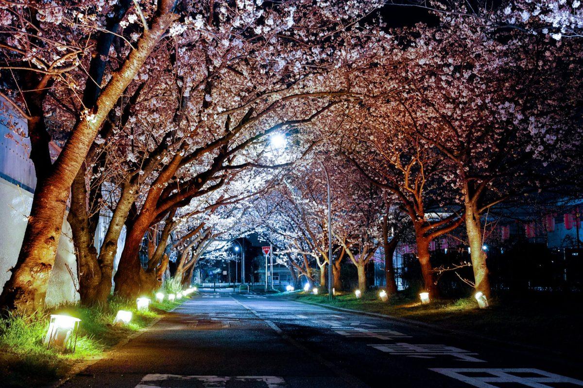 桜から学ぶ「状態」を超えて進むべき軌道
